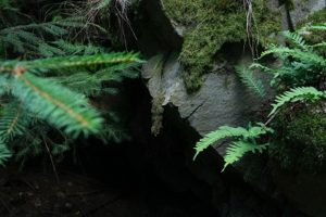stone cave entrance obscured by ferns