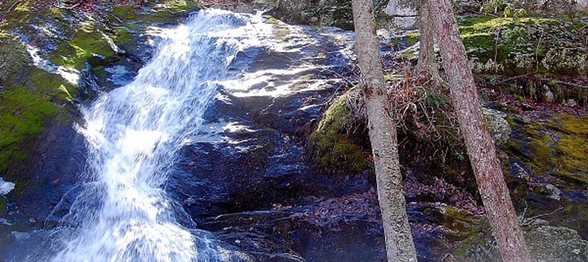 A small waterfall over dark rocks surrounded by a dense wooded forest setting.