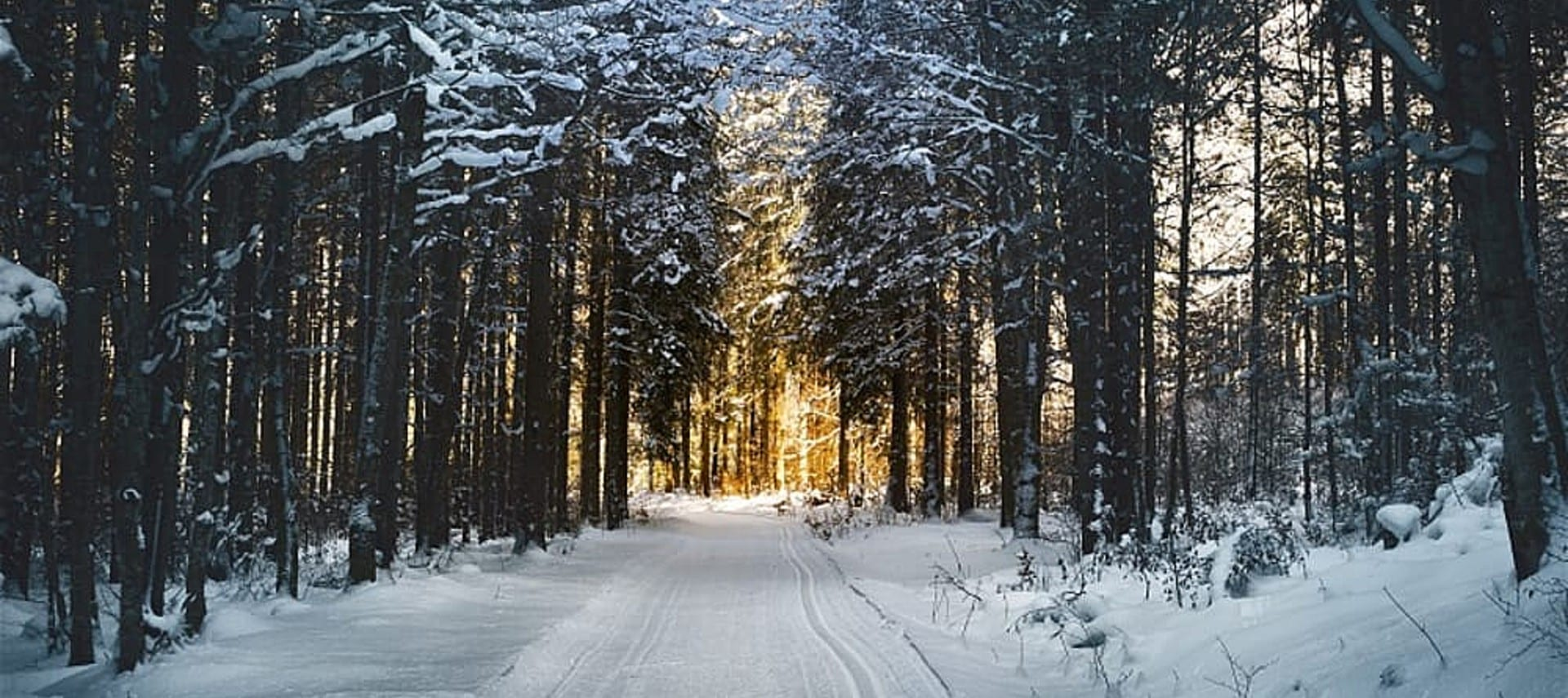An empty road covered in show showing tire tracks surrounded by tall snow covered trees in a forest.