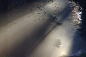 Dark foggy forest with light filtering through leaves