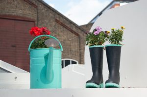 Red geraniums growing in an turquoise watering can and daisies growing in black rain boots